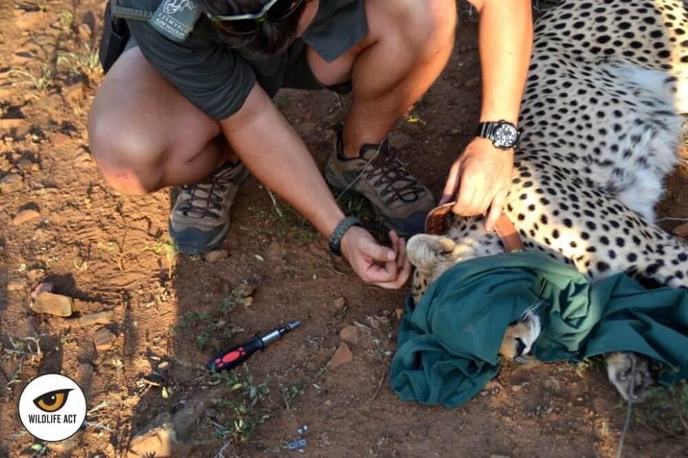 Andrew Bone Wildlife ACT