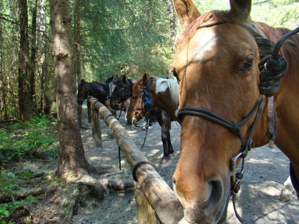 Horseback ride through the Chilkoot Trail